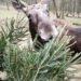 Brněnská zoo si odvezla od Avionu Brno 900 stromků
