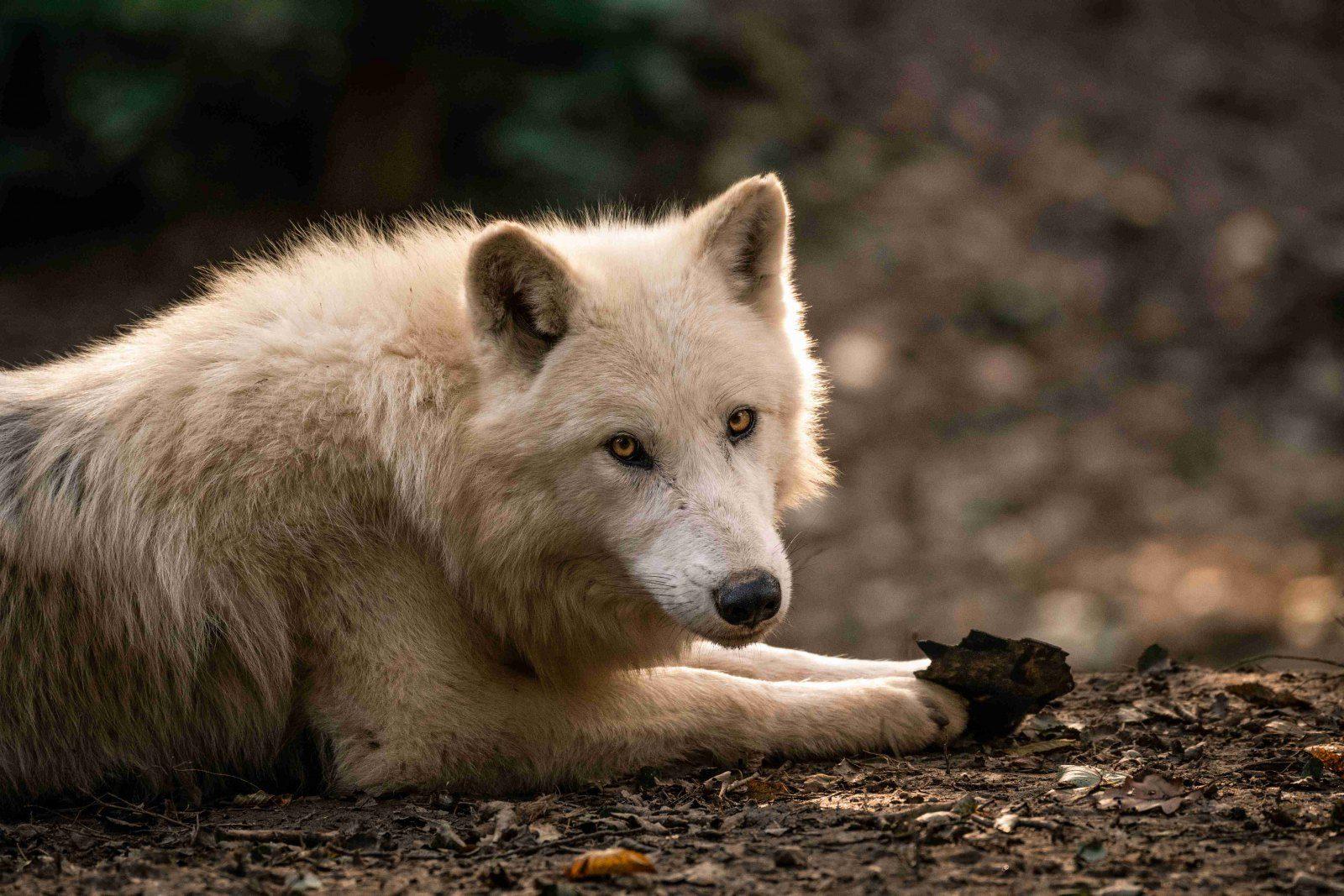 Zoo Brno můžete navštívit on-line
