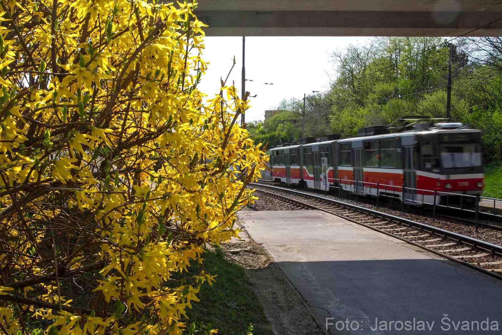 jaro v Líšni