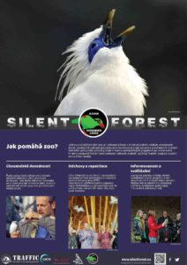 silent forest2